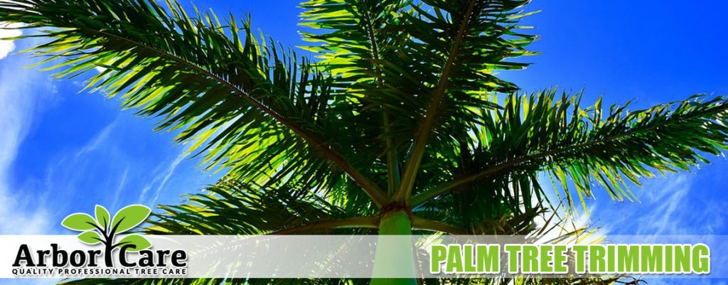 Palm Tree Trimming Services