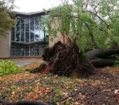 Storm & Monsoon Damage Tree Services