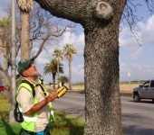 Tree Assessment