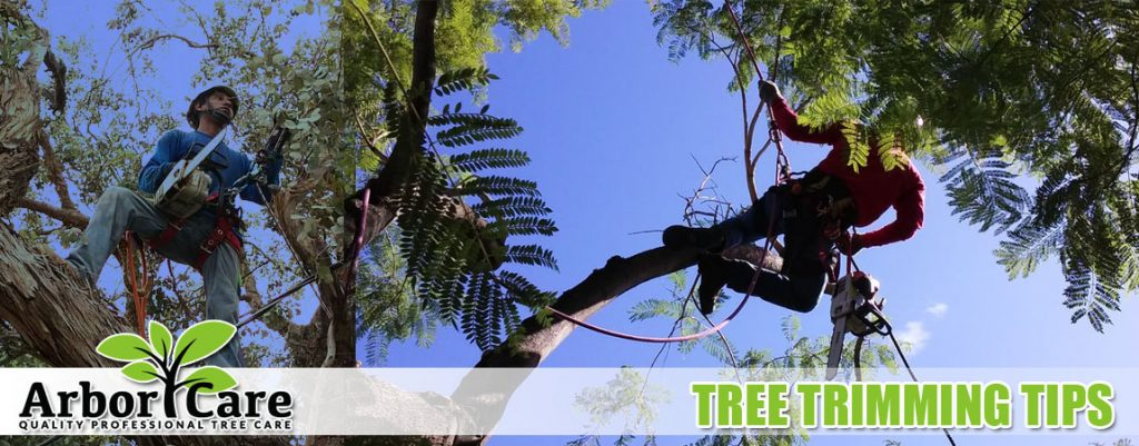 Tree Trimming Tips - How To Trim A Large Or Small Tree