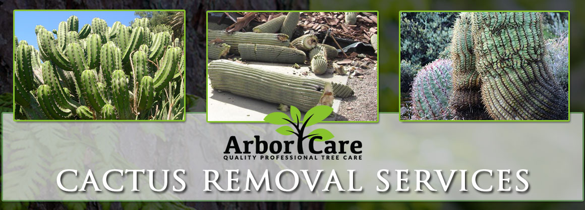 Cactus Removal