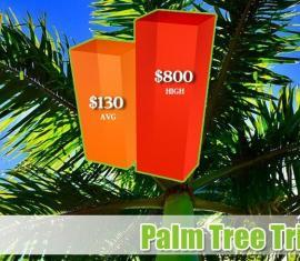Palm Tree Trimming Costs Phoenix Arizona