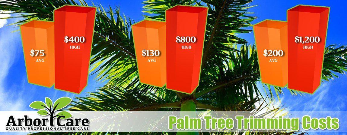 Palm Tree T Cost Phoenix Arizona