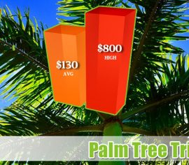 Palm Tree Trimming Costs Phoenix Arizona
