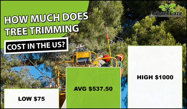 How Much Does Tree Trimming Cost?