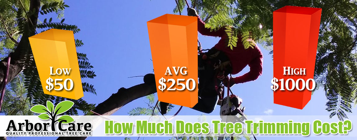 Tree Trimming Costs 2018