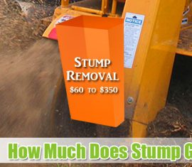 How Much Does Stump Grinding Cost in 2018 - Stump Removal Cost Near Me