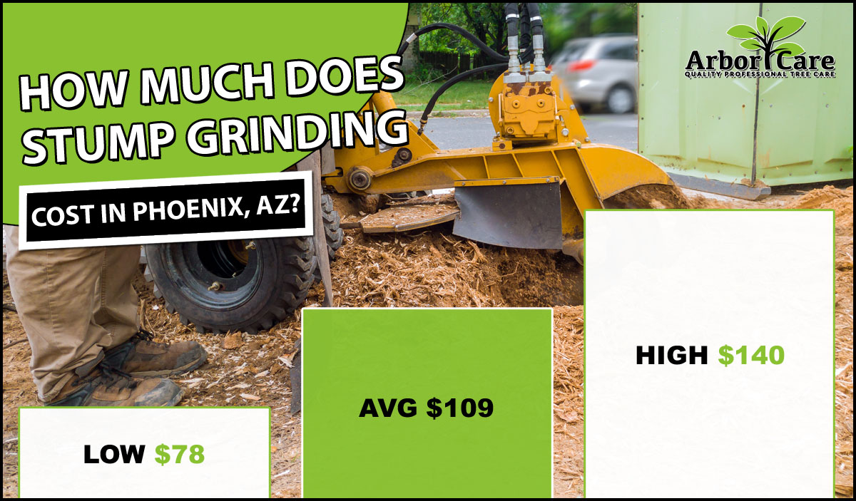 Stump Grinding Cost in Phoenix, AZ