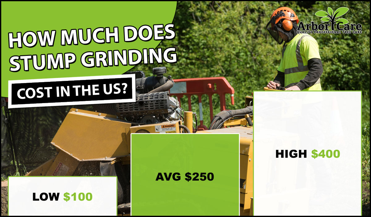 Stump Grinding Cost in the US