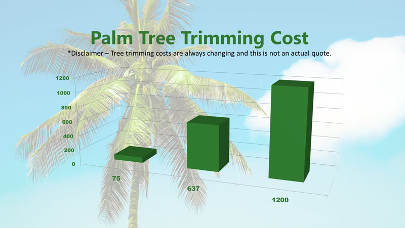 Palm Tree Trimming Cost