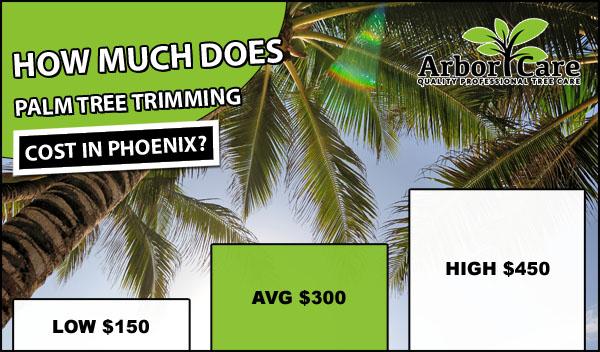 Palm Tree Trimming Cost Phoenix AZ - ArborCare