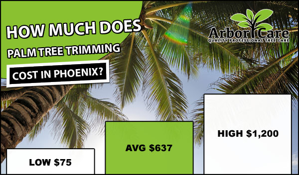 Palm Tree Trimming Cost Phoenix