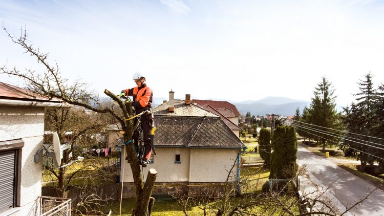 TREE PRUNING TECHNIQUES