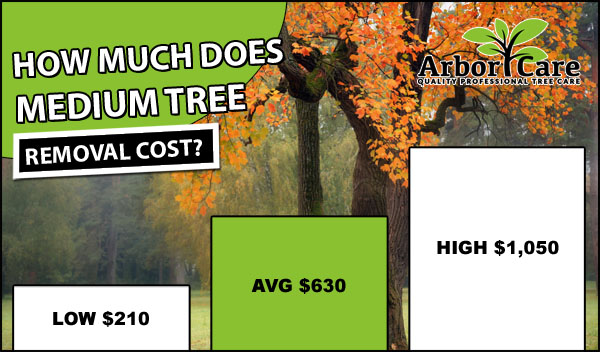 Medium Tree Removal Cost