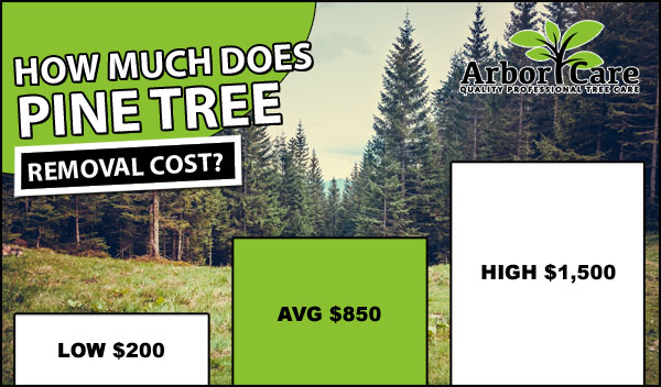 Pine Tree Removal Cost
