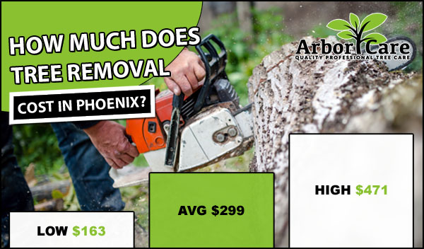 Tree Removal Cost Phoenix AZ