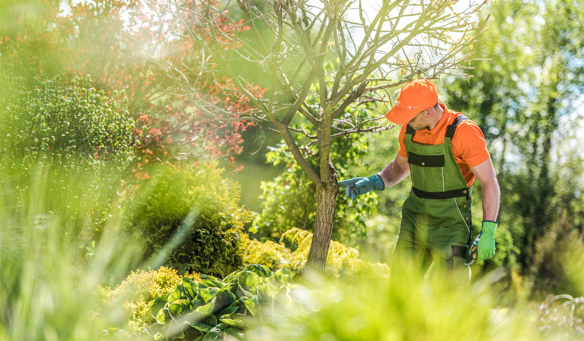 When to Call An Arborist for Tree Assessment