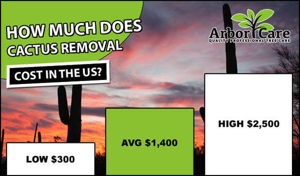Cactus Removal Cost