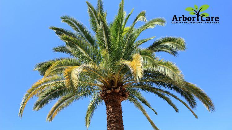 Palm Tree Removal Near Me